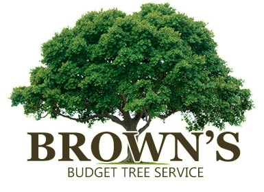 Brown's Budget Trees